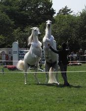 horseshow3-4.jpg