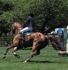 horseshow2-3.jpg