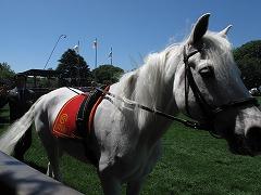 horseshow3-1.jpg