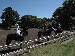 horseshow3-12.jpg
