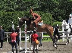 horseshow3-14.jpg