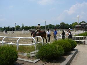 20120601_01 ORAグランドホースショー