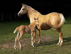 300px-Mare_and_foal_(Kvetina-Marie).jpg