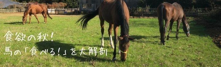 食欲の秋!馬の「食べる!」を大解剖