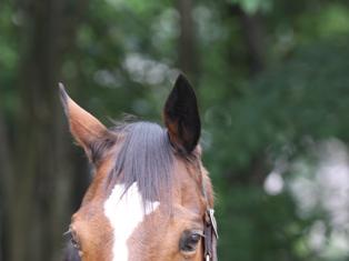 horse00061.jpg