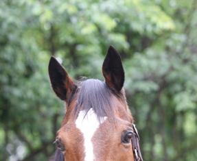 horse00101.jpg