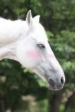 horse0052-po-ss.jpg