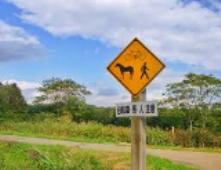 【馬と交通ルール】