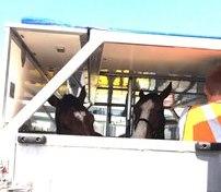 世界で活躍する馬達 ~馬の輸送~