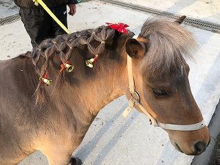 馬ってどんな動物?【27】馬のたてがみとしっぽ②編み込み篇