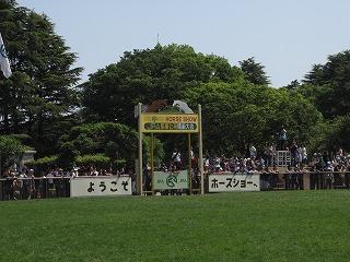 horseshow2-1.jpg