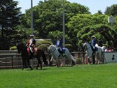 horseshow3-2.jpg