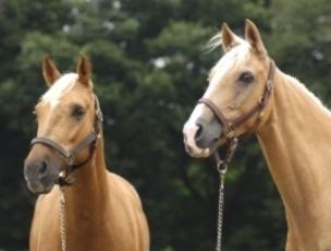 12月6日は「音の日」・馬の「耳」の不思議
