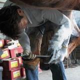 【馬の蹄(爪)と装蹄師の仕事】