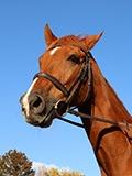 HorsePhoto