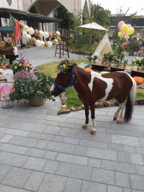 HAS浜松乗馬クラブのポニーイベント