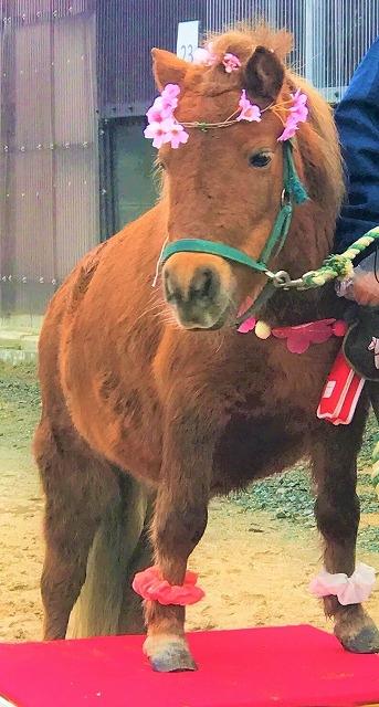 乗馬クラブクレイン東広島のポニーイベント