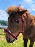 乗馬クラブクレイン東広島のポニー