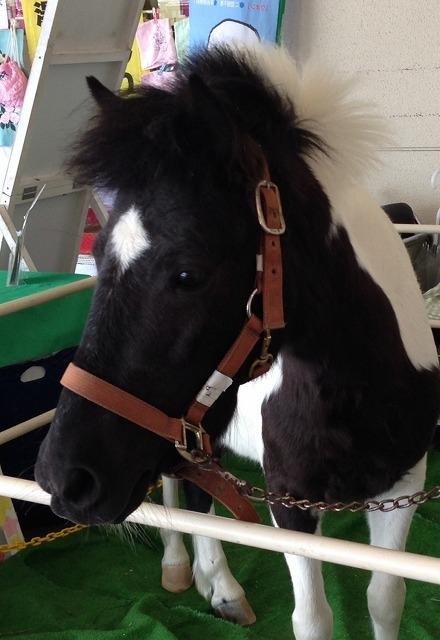 ニッケ乗馬クラブ・クレイン加古川のポニーイベント