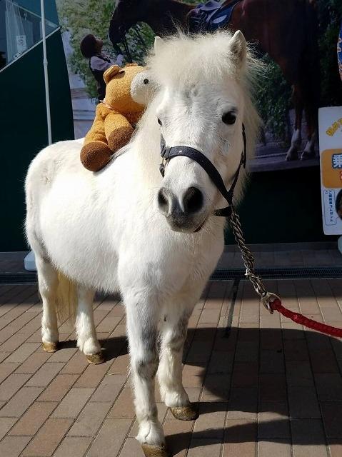 乗馬クラブクレイン北大阪のポニーイベント