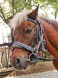 両備乗馬クラブ・クレイン岡山のポニー2