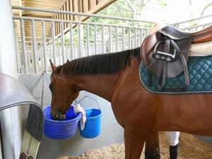 20110604_ジュネス 馬装中